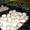 Продаю грибы шампиньоны от производителя #952429