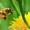 Пчелопакеты карпатской пчелы и пчелиные матки.Есть в наличии! Доставка #1242896