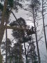спилить дерево, удалить дерево, корчевание деревьев 233 03 70