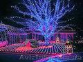 украшение деревьев фасада, новогодняя иллюминация, световое оформление