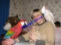 Элитные попугаи из питомника«Г.Р.А.Ф.».