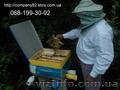 Бджолина матка плідна мічена Карпатка. Доставка по Україні