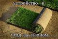 Устройство газона, посевной и рулонный газон