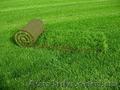 Газон рулонный зеленый