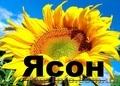 Насіння сняшнику Ясон (106-108дн) ранньостиглий