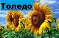 Насіння соняшнику гібриду Толедо (106 - 109 дн.) толерантний до гранст