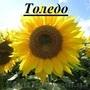 Посівний матеріал гібридів соняшнику під євро-лайтинг