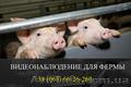 Установка видеонаблюдения для свиноферм