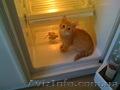 Быстрый ремонт холодильников на дому.