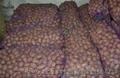 Картофель оптом 5+ от производителя урожай 2017 по 2.50 грн/кг