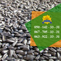 Якісне насіння соняшника від виробника